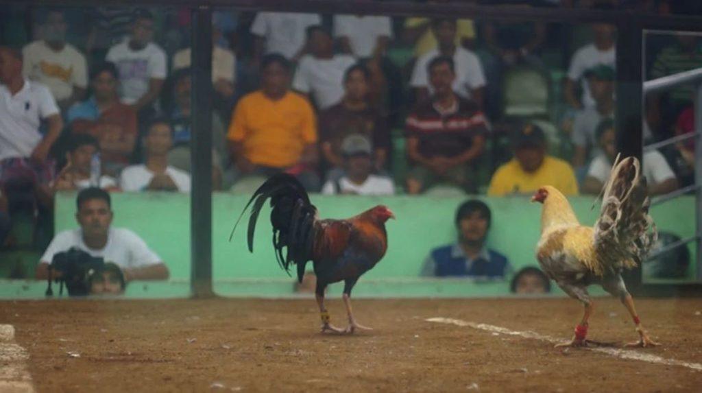 Sabung Ayam Bangkok
